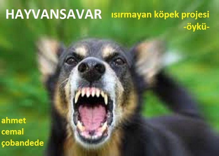 HAYVANSAVAR