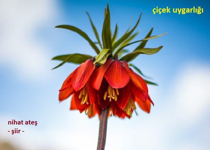 Çiçek Uygarlığı