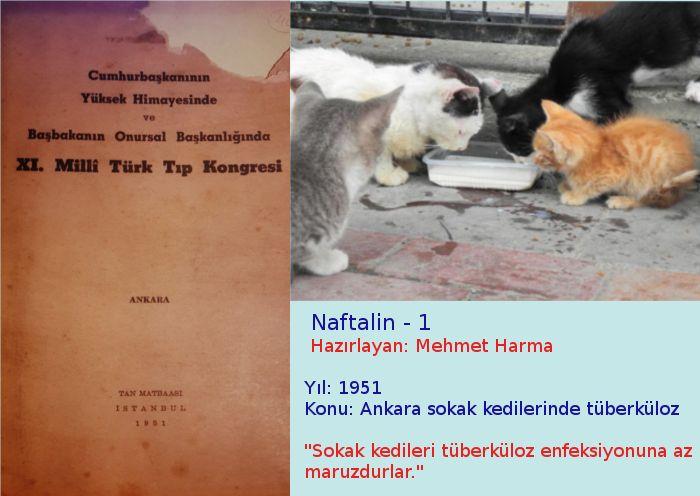 Ankara sokak kedilerinde tüberküloz